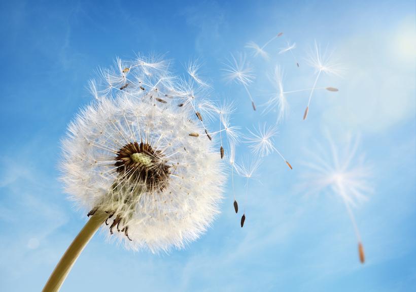 Gilla förändring - Protea Leadership